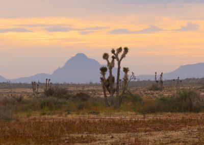 Vizcaino Desert (Dawn)